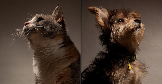 atalis-chien-chat